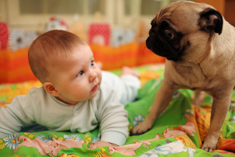 cagnolino e bebè in arrivo
