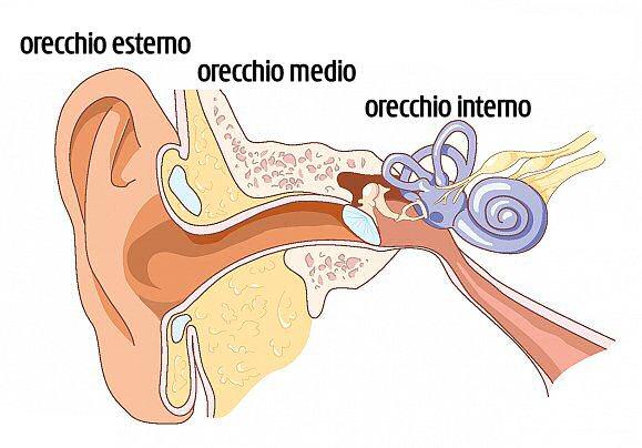 orecchio esterno, medio, interno